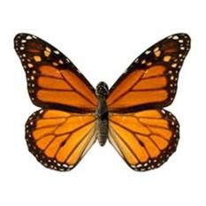 Электронная бабочка в банке «Монарх»
