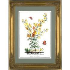 Картина Жак Шартон (J. Charton) Дельфиниум желтый