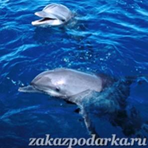 Сертификат Плавание с дельфинами для четверых в Ярославле