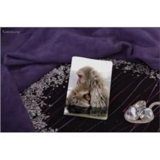 Обложка для паспорта / автодокументов Обнимающиеся обезьянки