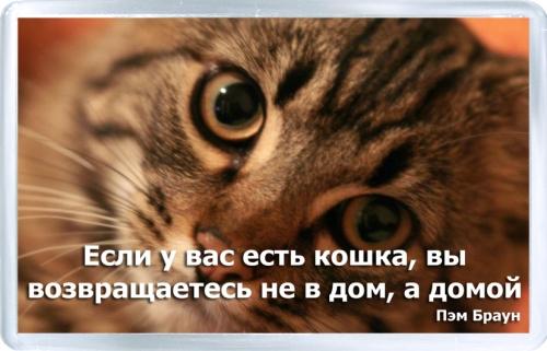 Магнитный подарок: Если у вас есть кошка
