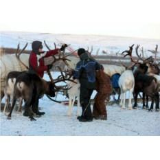 Сертификат Поездка на оленью ферму: 2 взрослых и ребенок