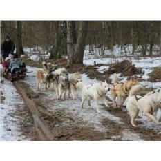 Семейный отдых с детьми Катанием на собачьих упряжках