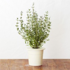 Картридж для выращивания Чабрец для умного сада