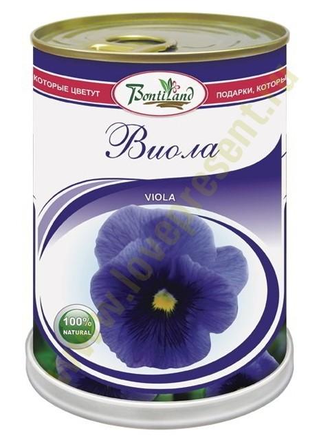 Цветок в банке Виола