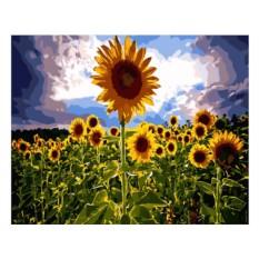 Картины по номерам «Вслед за солнцем»