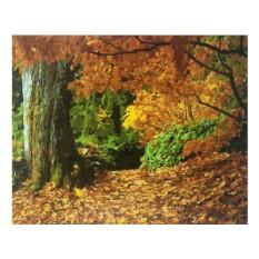 Картины по номерам «Осенний лес»