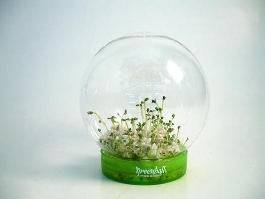 Набор для выращивания растений Зеленый шар. Томат