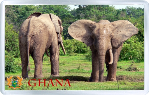 Магнит на холодильник: Гана. Африканский слон