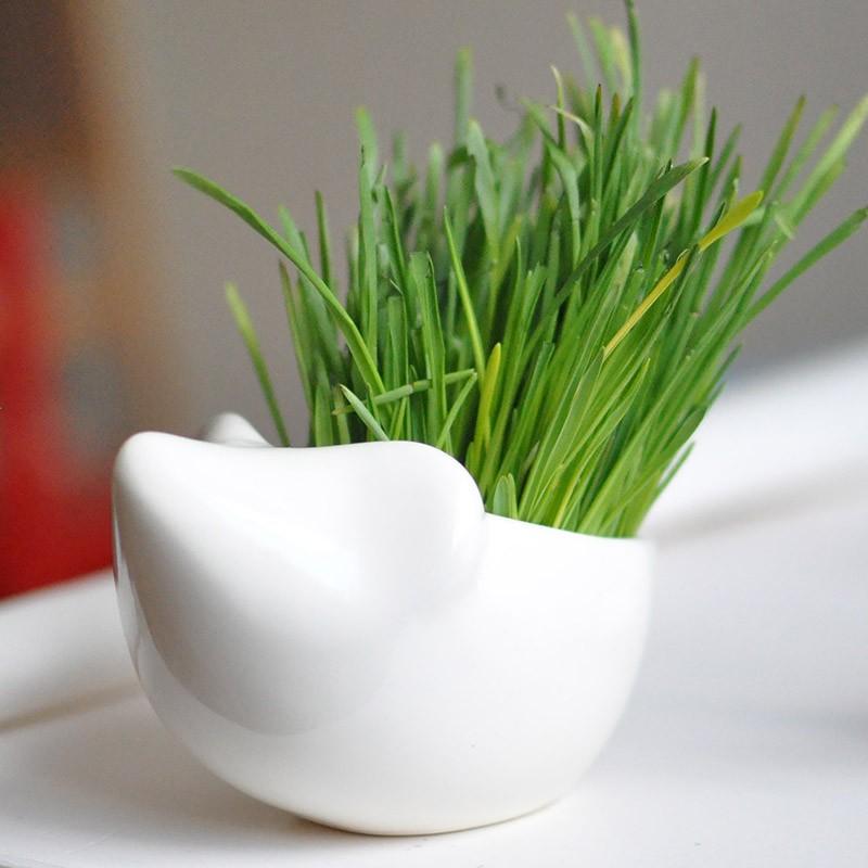Набор для выращивания травы Ежик