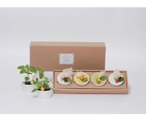 Набор для посадки растений «Сливки»