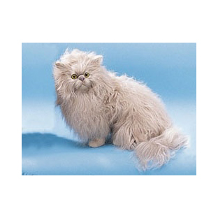 Модель «Кошка персидская»
