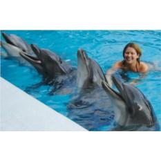 Подарочный сертификат Плавание с дельфинами