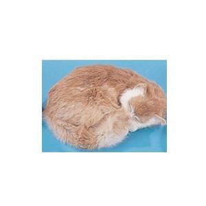 Кошка сопящая