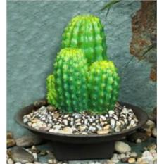Фонтан Большой кактус
