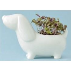 Набор для выращивания Собачка Шарик