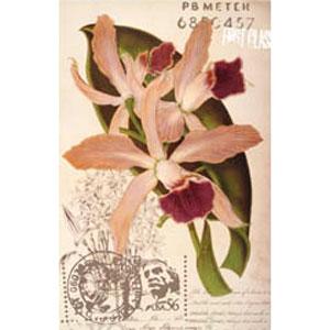 Женская футболка «Орхидея»