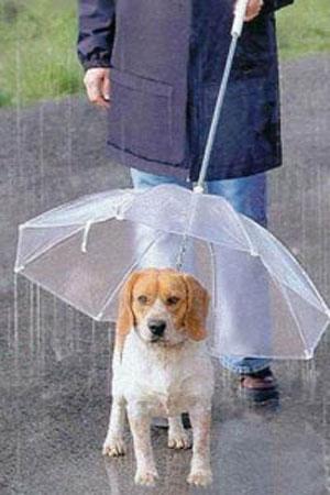 Зонт для собак (прозрачный)