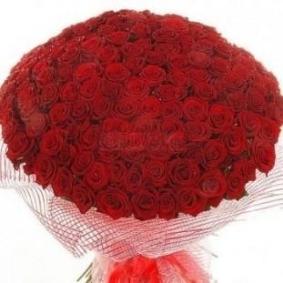 Букет цветов 201 роза (70 см.)