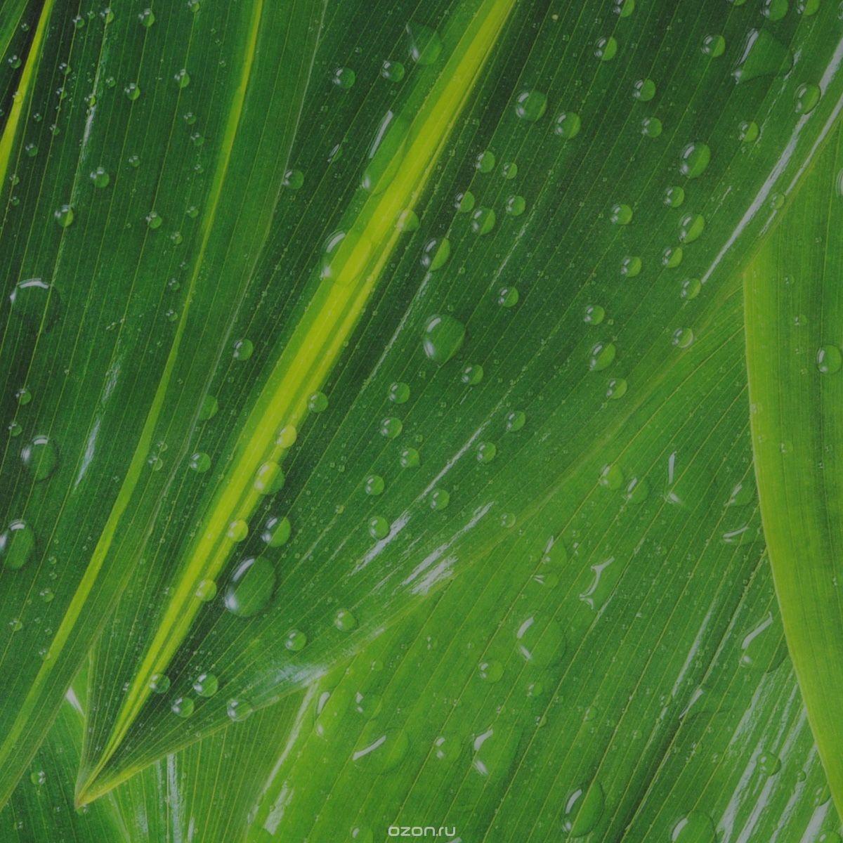 Транспарентная бумага Folia Капли дождя, зеленая (50,5x70 см)
