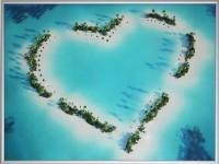 Картина Swarovski Любовь к экзотике