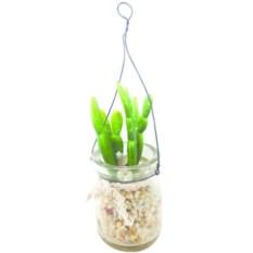 Суккулентное растение Gardman в стеклянной банке с подвесом