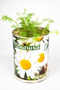 Цветок в банке Ромашка