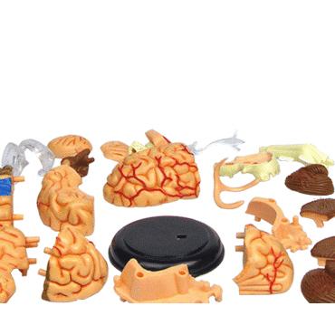 Модель мозга человека своими руками