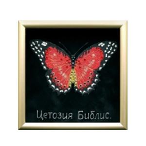 Картина «Бабочка-библис»