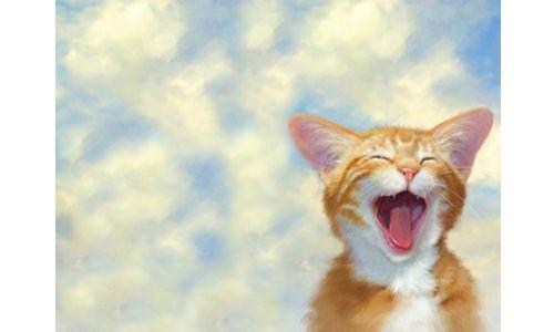 Обложка для паспорта Рыжий котенок