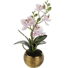Декоративная композиция Тигровая орхидея
