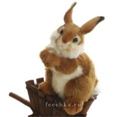 Зайчонок, Hansa
