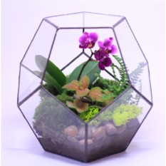 """Сад в стекле """"Эйфория"""""""