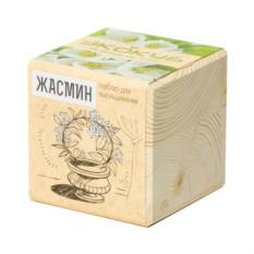 Набор для выращивания Жасмин (Ecocube)