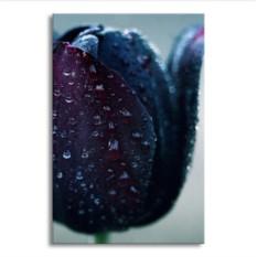 Картина Черный тюльпан