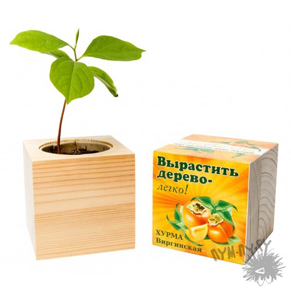 Экокуб Хурма Виргинская