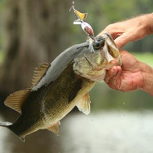 Подарочный сертификат «Рыбалка в Карелии»