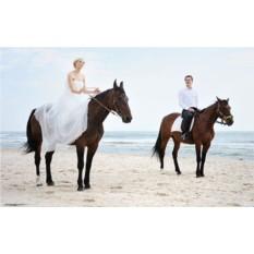 Подарочный сертификат Романтическая прогулка на лошадях