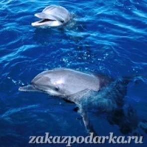 Подарочный сертификат Плавание с дельфинами для шестерых