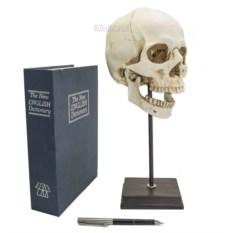 Макет черепа на подставке (высота 35 см)