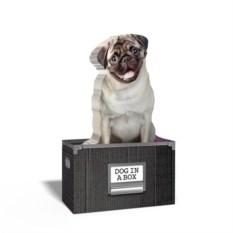 Бумага для заметок Dog in a box