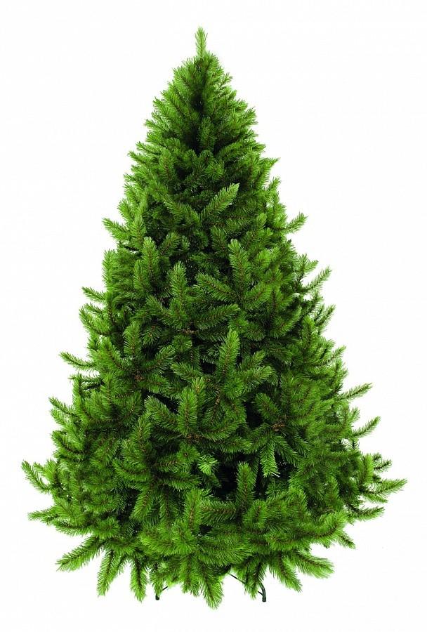 Сосна Триумф Серебряный бор зеленая, 215 см.