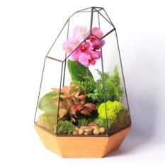 Сад в стекле Архирариум
