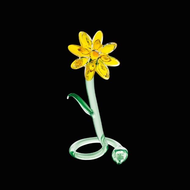 Луговой цветок