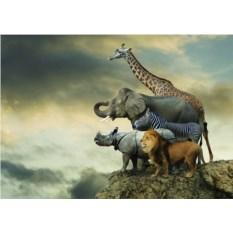 Пазл из 500 элементов Животные на краю скалы