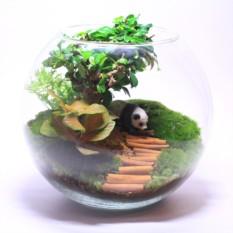 """Сад в стекле """"Инь - Янь"""""""