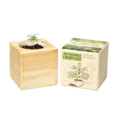 Набор для выращивания Ecocube Pine Лиственница