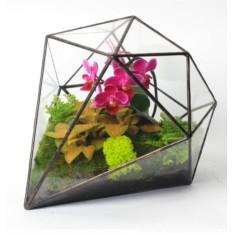 Флорариум  Летний сад