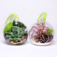 Набор из 2 прозрачных елочных шаров с живыми растениями