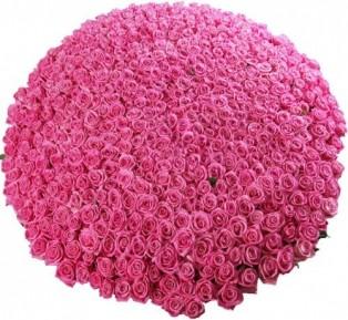 Букет из 501 розовой розы